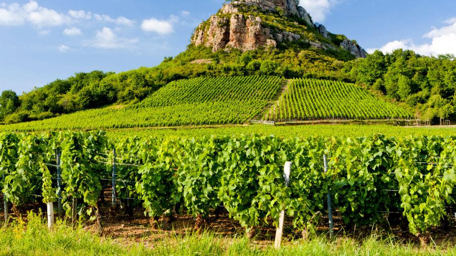burgundy-wine-region
